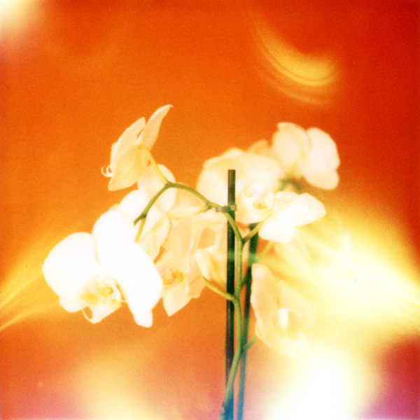 19 - orchidées rouges