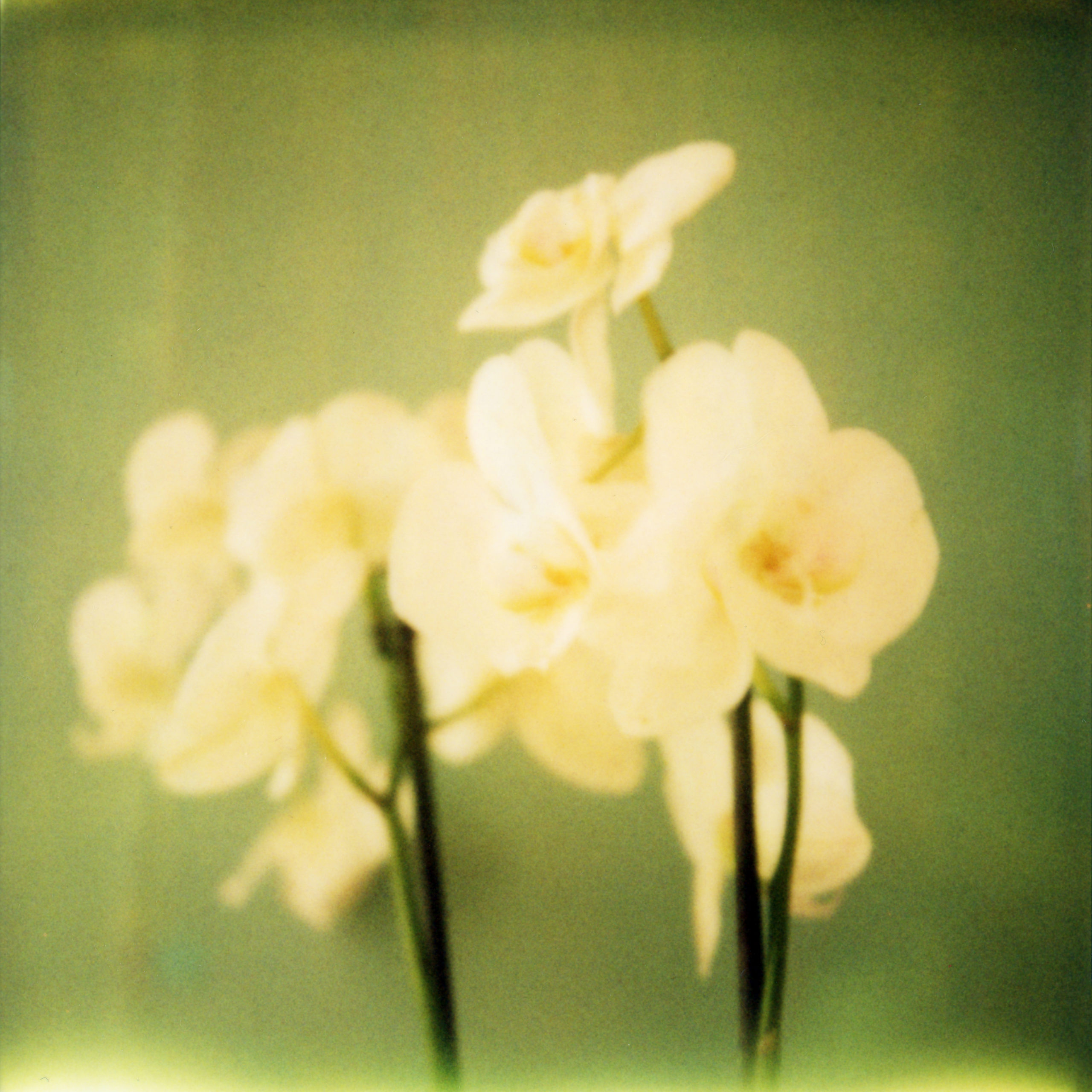 orchidees_vert
